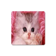 Cat  Animal  Kitten  Pet Square Magnet
