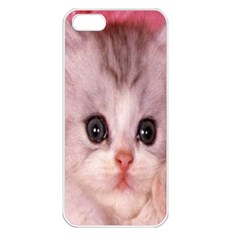 Cat  Animal  Kitten  Pet Apple Iphone 5 Seamless Case (white)