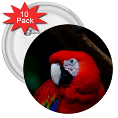Scarlet Macaw Bird 3  Buttons (10 Pack)