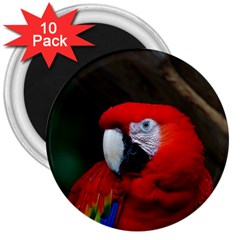 Scarlet Macaw Bird 3  Magnets (10 Pack)