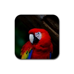 Scarlet Macaw Bird Rubber Coaster (square)