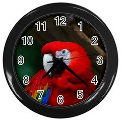 Scarlet Macaw Bird Wall Clocks (black)