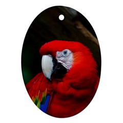 Scarlet Macaw Bird Oval Ornament (two Sides)
