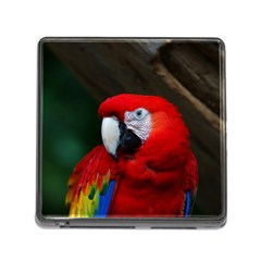 Scarlet Macaw Bird Memory Card Reader (square)