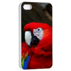 Scarlet Macaw Bird Apple Iphone 4/4s Seamless Case (white)