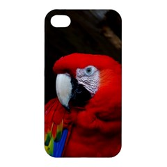 Scarlet Macaw Bird Apple Iphone 4/4s Premium Hardshell Case