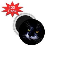 Face Black Cat 1 75  Magnets (100 Pack)