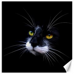 Face Black Cat Canvas 20  X 20