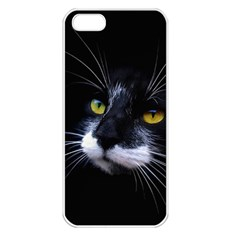 Face Black Cat Apple Iphone 5 Seamless Case (white)