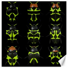 Beetles Insects Bugs Canvas 16  X 16