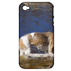 Akita In Water Apple Iphone 4/4s Hardshell Case (pc+silicone)