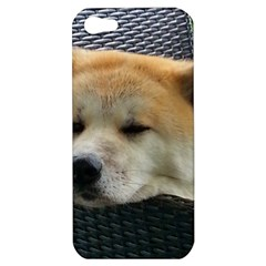 Akita Chilling Apple Iphone 5 Hardshell Case