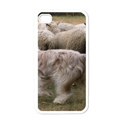 Bearded Collie Working Apple Iphone 4 Case (white)