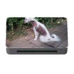 Chinese Crested Dog Sitting Memory Card Reader With Cf