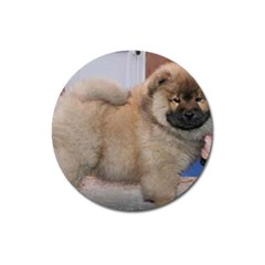 Chow Chow Pup Magnet 3  (round)