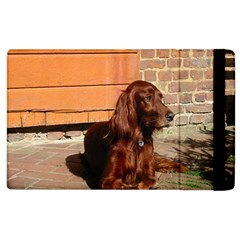 Irish Setter Laying Apple Ipad 2 Flip Case