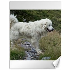 Great Pyrenees Full Canvas 36  X 48