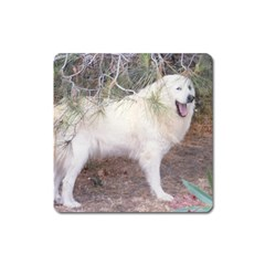 Great Pyrenees In Forest Square Magnet