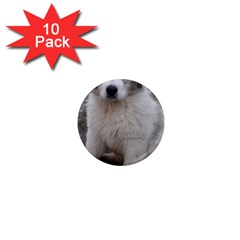 Great Pyrenees Puppy 1  Mini Magnet (10 Pack)