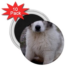 Great Pyrenees Puppy 2 25  Magnets (10 Pack)