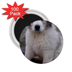Great Pyrenees Puppy 2 25  Magnets (100 Pack)
