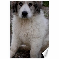 Great Pyrenees Puppy Canvas 12  X 18