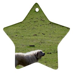 Great Pyrenees Working Ornament (star)
