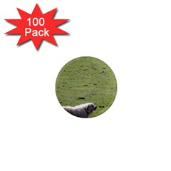 Great Pyrenees Working 1  Mini Magnets (100 Pack)