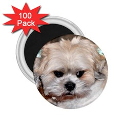 Lhasa Apso Groomed 2 25  Magnets (100 Pack)