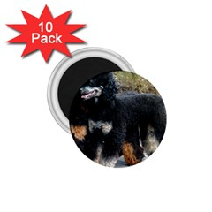 2 Poodles Full 1 75  Magnets (10 Pack)