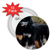 2 Poodles Full 2 25  Buttons (10 Pack)