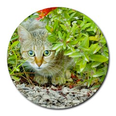 Hidden Domestic Cat With Alert Expression Round Mousepads