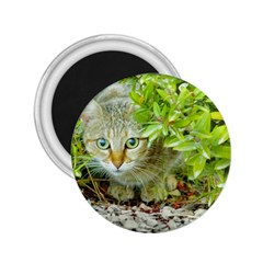 Hidden Domestic Cat With Alert Expression 2 25  Magnets