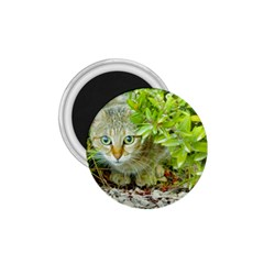 Hidden Domestic Cat With Alert Expression 1 75  Magnets