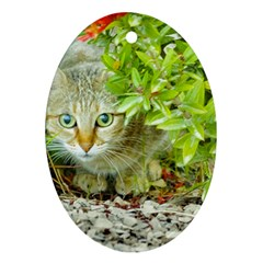 Hidden Domestic Cat With Alert Expression Ornament (oval)