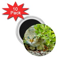 Hidden Domestic Cat With Alert Expression 1 75  Magnets (10 Pack)