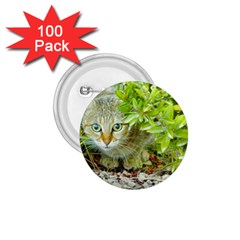 Hidden Domestic Cat With Alert Expression 1 75  Buttons (100 Pack)