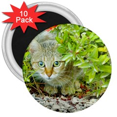 Hidden Domestic Cat With Alert Expression 3  Magnets (10 Pack)