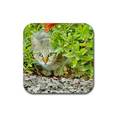 Hidden Domestic Cat With Alert Expression Rubber Square Coaster (4 Pack)