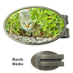 Hidden Domestic Cat With Alert Expression Money Clips (oval)