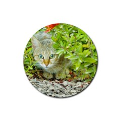Hidden Domestic Cat With Alert Expression Rubber Round Coaster (4 Pack)
