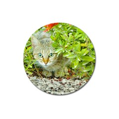Hidden Domestic Cat With Alert Expression Magnet 3  (round)