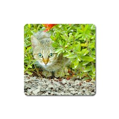 Hidden Domestic Cat With Alert Expression Square Magnet
