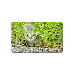Hidden Domestic Cat With Alert Expression Magnet (name Card)