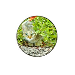 Hidden Domestic Cat With Alert Expression Hat Clip Ball Marker