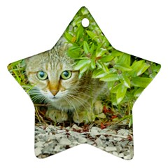 Hidden Domestic Cat With Alert Expression Star Ornament (two Sides)