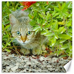 Hidden Domestic Cat With Alert Expression Canvas 12  X 12