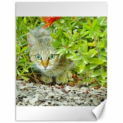 Hidden Domestic Cat With Alert Expression Canvas 12  X 16