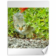 Hidden Domestic Cat With Alert Expression Canvas 36  X 48