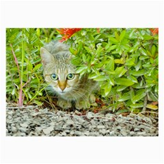 Hidden Domestic Cat With Alert Expression Large Glasses Cloth